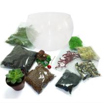 Terrarium Starter Kit - Terrarium Wide Mouthed Lantern - Terrarium Begin... - $44.90