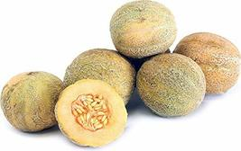 200 Cantaloupe Seeds Minnesota Midget Small Fruit Seeds TkMorebargins - $36.63