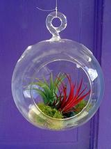 Fairy Air Plant Garden Indoor or Outdoor Fairy Garden Fairy Garden Kit T... - $49.50