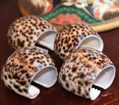 """SET 4 REAL SHELL COWRIE NAPKIN HOLDERS NATURAL HUGE 2"""" WIDE PHILIPPINES ... - $24.99"""
