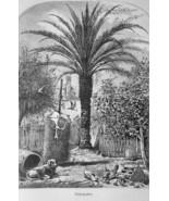 FLORIDA Date Palm Tree in St. Augustine - 1883 German Print - $16.20