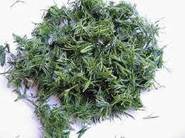 Dill Seed, Bouquet, Heirloom, Non GMO, 50 Seeds, Herb Fresh or Dried - $5.99