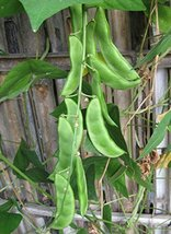 25 Packet Seeds of Wood's Prolific Lima Beans - $18.81