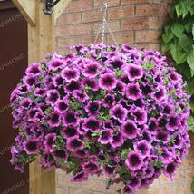 100 pcs/ Bag Petunia seeds Climbing Petunia Flower plant Mix Petunia Hyb... - $4.75