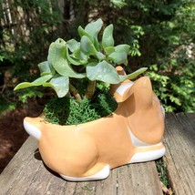 "Corgi Dog Planter with Ripple Jade Succulent, ceramic 5"" Puppy image 6"