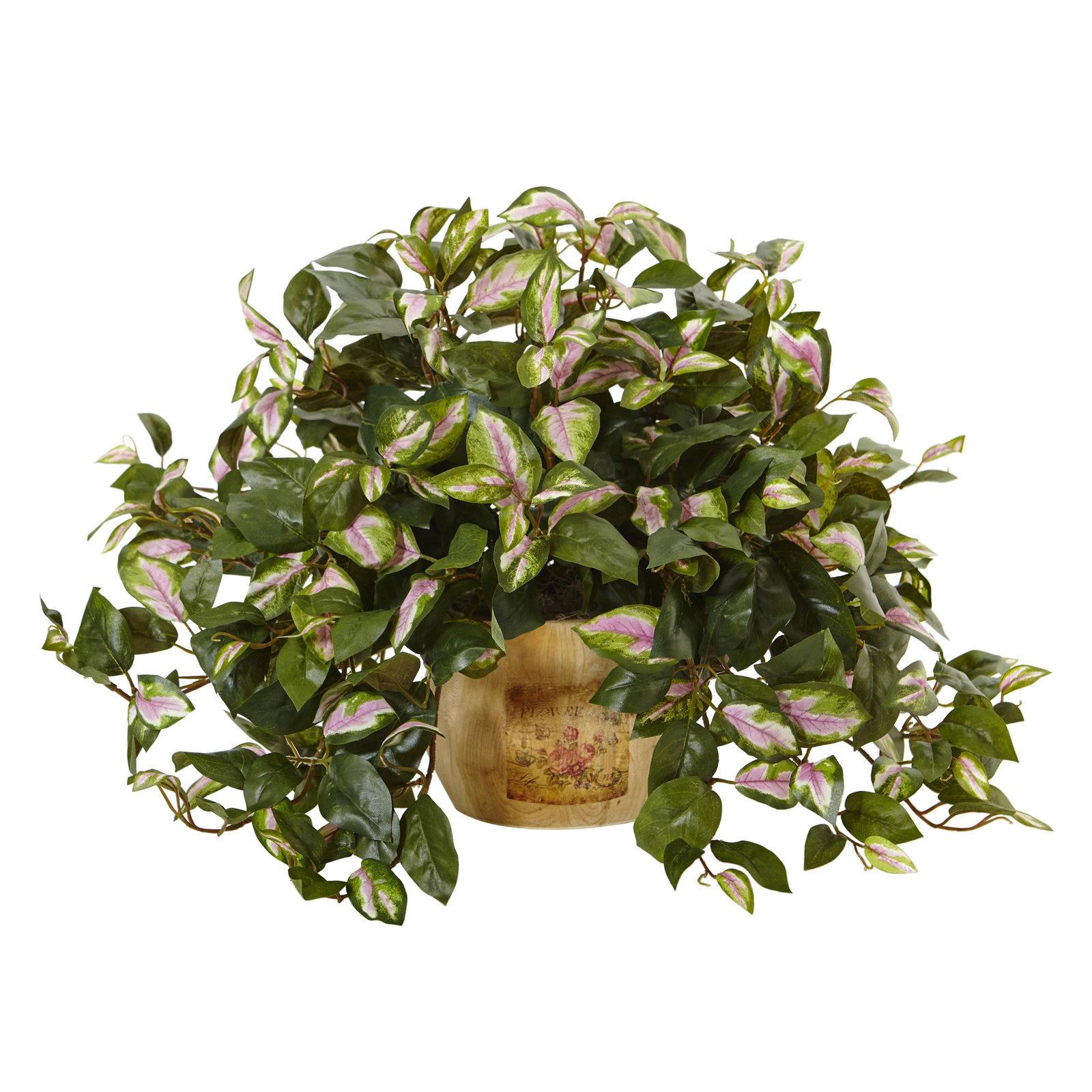 """19"""" Hoya in Wooden Pot - $62.32"""
