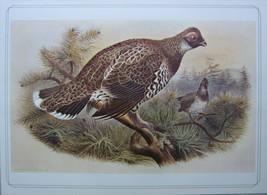 BEAUTIFUL BIRD PRINT ~ SIBERIAN SPRUCE GROUSE ~ JOSEF WOLF - $50.35
