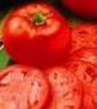 Tomato - Homestead - Non-Hybrid - Non-GMO - St. Clare Heirloom Seeds - $2.25