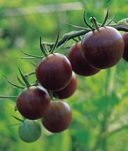 Organic 500 Seeds Lycopersicon esculentum convar Brown Black Cherry Smal... - $6.11