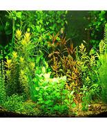 1000 seeds Aquarium Grass Seeds Water Aquatic Plant Seeds (Mix Included ... - $14.58