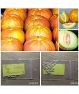 Thai Original Golden Round Muskmelon ~20 Top Quality Seeds - Extra Flavor/Sweet - $13.98