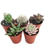 "Plants Fairy Succulent Collection Gardens Terrarium 5 Plant 1.75""Pots Ou... - £18.39 GBP"