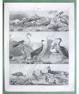 BIRDS Bittern Sandpiper Crane Heron Stork Avocet ... - 3x 1844 SUPERB Pr... - $15.26