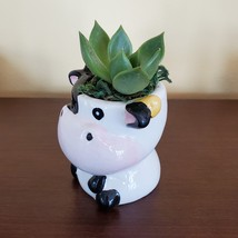 Cow Planter with Succulent, Live Plant Gift, Echeveria Agavoides, Farm Animal image 4