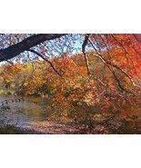 1000 Piece Jigsaw Puzzle AutumnInRockefeller - Natural Scenic Landscape ... - $17.22