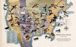 """Pictorial 16""""x26"""" Map of Migrating Birds Ducks Geese Swans US Canada Wall Poster - $16.34"""