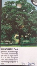 Chinquapin Oak Tree 4-6 FT Healthy Shade Tree Plants Shipped To All 50 States US - $96.95