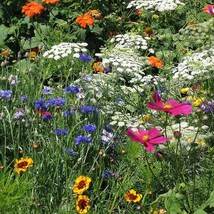 WILDFLOWER mix for sunny areas, annuals and perennials 10 grams of seeds - $32.99