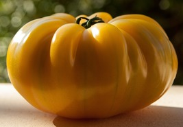 Tomato Seeds - Golden Queen (O)  - Vegetable Seeds - Outdoor Living - FREE SHIPP - $39.99+
