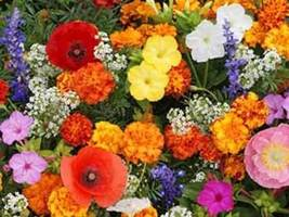 SHIP FROM US 7,800 Deer Resistant Flower Mix Seeds, ZG09 - $23.96