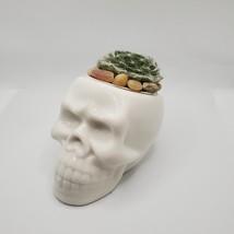 "Sempervivum Succulent in Ceramic Skull Planter 3.5"", Hens & Chicks Live Plant image 5"