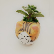 """Echeveria Succulents in Laughing Cat Planters, Live Plants in 2.5"""" Kitten Pots image 7"""
