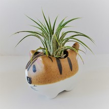 """Air Plant in Cat Planter 3"""", Kitty Ceramic Pot with Emotion Face image 4"""