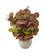 """36"""" Seagrape Plant in Sand Colored Bowl - $185.03"""