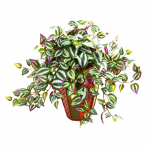 Wandering Jew Artifical Plant In Decorative Plantert - $64.24