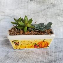 Fall Succulent Dish Garden in vintage harvest loaf pan, Ceramic pumpkin planter image 1