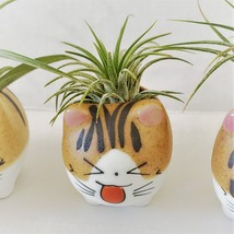 """Air Plant in Cat Planter 3"""", Kitty Ceramic Pot with Emotion Face image 9"""