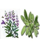 50 Seeds - Salvia officinalis - Common Sage - $8.99