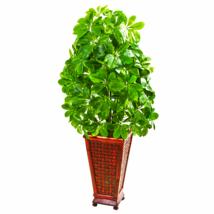 Schfflera Artificial Plant In Decorative Planter (Real Touch) - $104.63