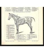 Horse Diagram Skeleton Anatomy 1897 Antique German Horses - $10.99
