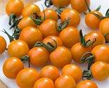 51qdscmcb9l. sl1500  thumb155 crop