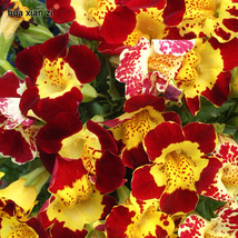 30 Pcs Mimulus Luteus Flower Seed, DG Decorative Flower Seeds - $7.13