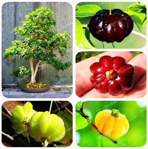 Super 10 Seeds 4 Kinds Eugenia Uniflora Fruits Surinam Cherry Garden Plants