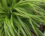 61ntfdxzeil. sl1500  thumb155 crop
