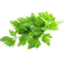 SHIP FROM US 160,000 Italian Giant Parsley Seeds - Microgreens or Garden... - $82.76