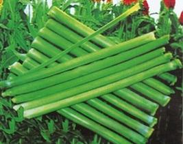BEST PRICE 20 Grams Seeds Rare Sweet Green Sugarcane,DIY Fruit Seeds NF6... - $9.00