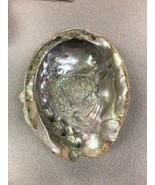 """Premium Large Abalone Polished Decorative Shell Seashell 5.5""""-7"""" - $21.77"""