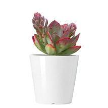 Greenaholics Succulent Plant Pots - 4.3 Inch Round Cylinder Planter for ... - €13,45 EUR