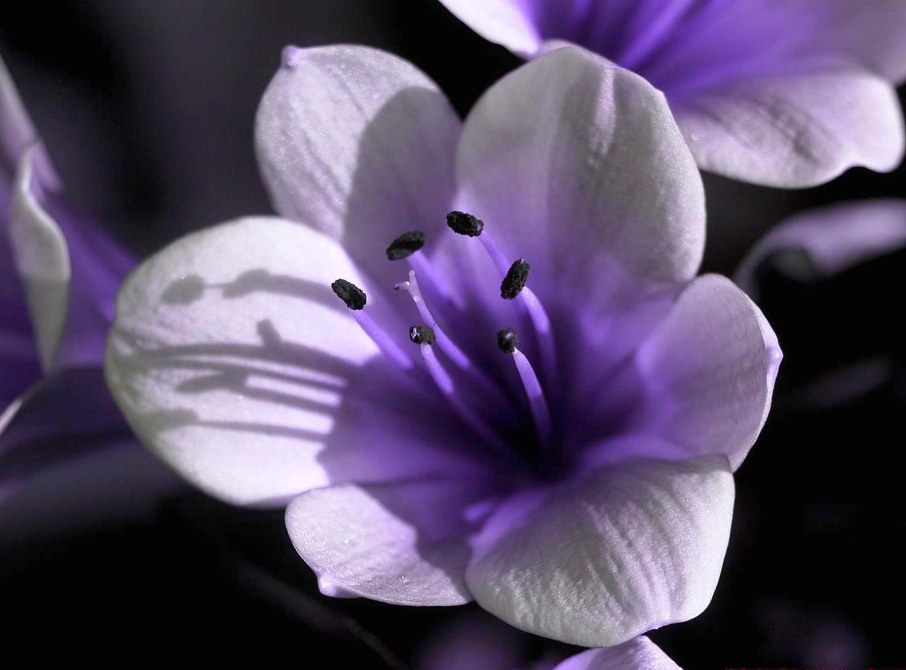 Clivia Flower Seeds Kaffir Lily Beautiful And 26 Similar Items