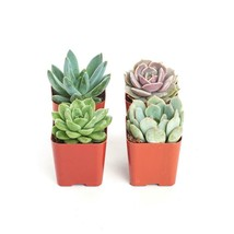 2 in. Rosette Succulent (Collection of 4) - $11.87