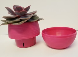 """Live Succulent in Red Self-Watering Pot - Echeveria Red Sky, 3"""" Plastic Planter image 2"""