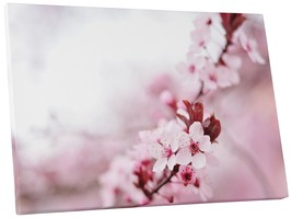 "Pingo World 0809QFYZPOS ""Cherry Blossom Flower"" Gallery Wrapped Canvas Wall Art, - $53.41"