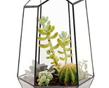 9.8 inches Handmade Glass Succulent Terrarium, Irregular (Irregular|Black)