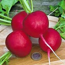 Radish Seed, Champion, Heirloom, Organic, Non Gmo, 50+ Seeds, Perfect Ra... - $4.00
