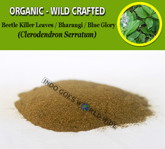 POWDER Beetle Killer Leaves Bharangi Blue Glory Clerodendron Serratum Or... - $7.85+