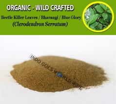 POWDER Beetle Killer Leaves Bharangi Blue Glory Clerodendron Serratum Organic - $7.85+